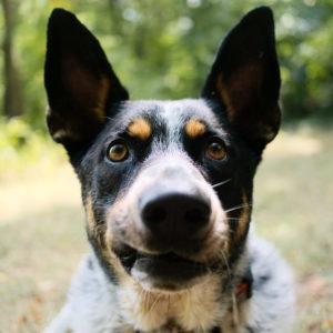 kukiz projekt zmian ustawa ochronie zwierząt