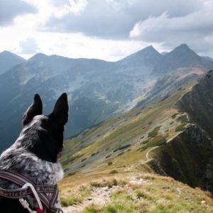 zakaz wejścia psem tatry słowackie