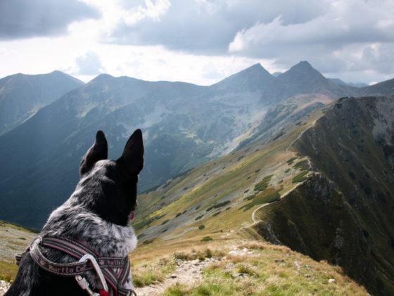 słowackie tatry zachodnie pies raczkowa Jarząbczy