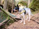 kara spacer psem bez smyczy