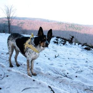 Góry Sowie pies