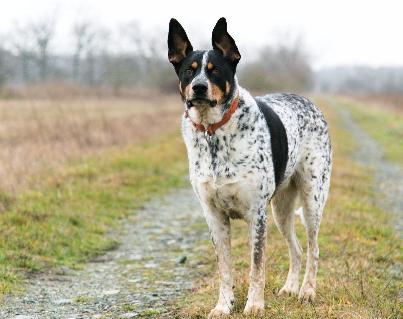 puszczanie psa luzem