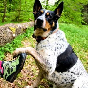 obowiązek wyprowadzenia wszystkich psów kagańcu