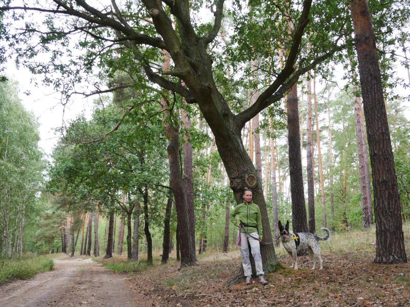 okolice Wrocławia psem Lubiatów