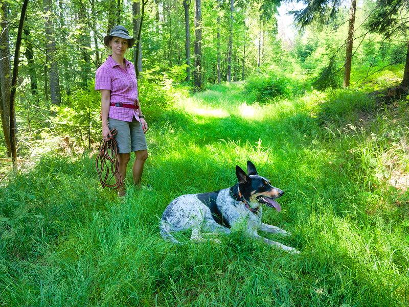 koronawirus zakaz wstępu lasu