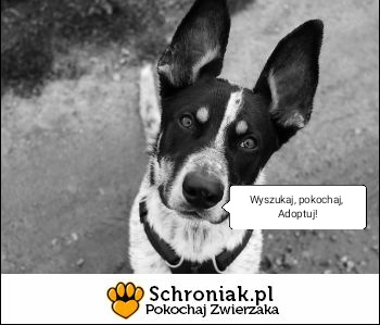 schroniak.pl