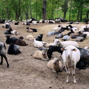 zakaz przemieszczanie teren gospodarstwa rolnego zwierzęta