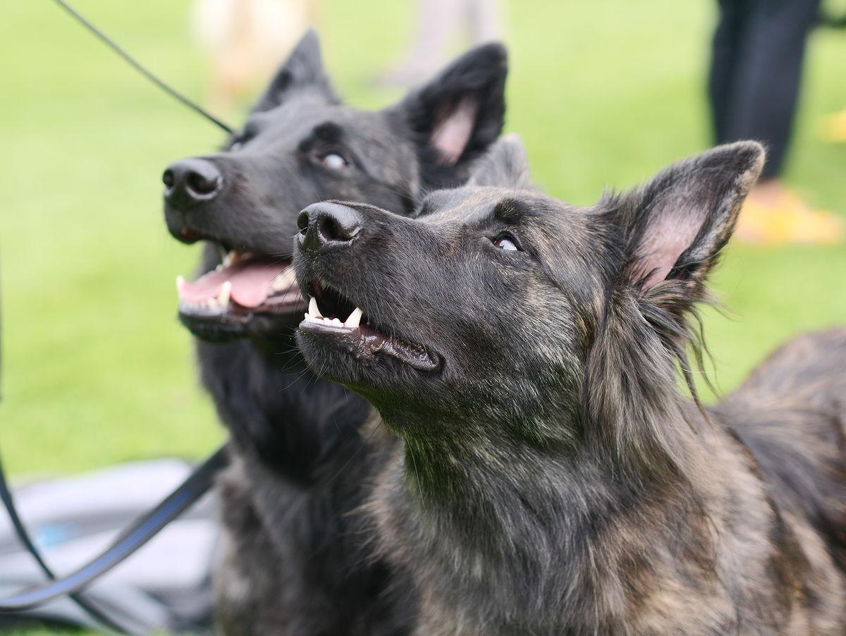szczucie psem człowieka działanie zachęcające agresji